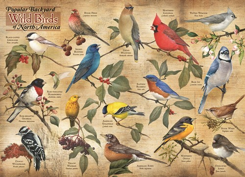 Cobble Hill puzzle 1000 pieces - Popular Backyard Wild Birds